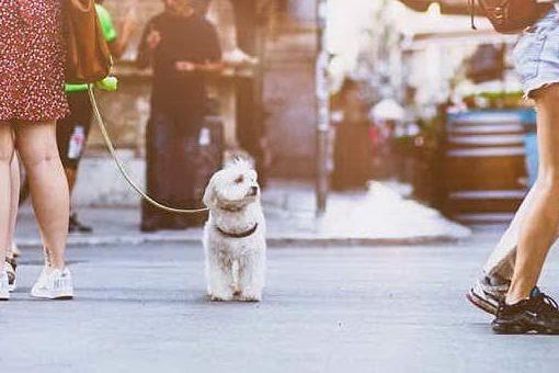 Protesta per il cane, il litigio al bar finisce con una coltellata