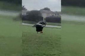 L'enorme alligatore passeggia sul campo da golf