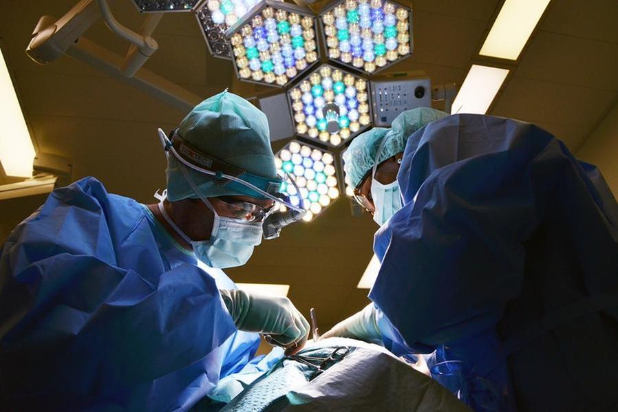 Trapiantato su un essere umanoil rene di un maiale: è la prima volta nella storia