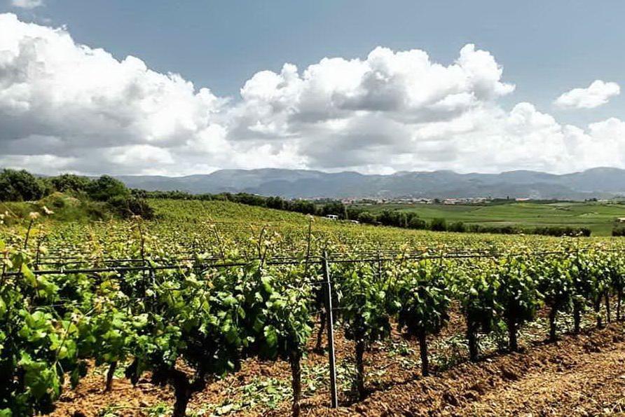 Le vie del Vermentino della Sardegna attraversano Senorbì e Serdiana