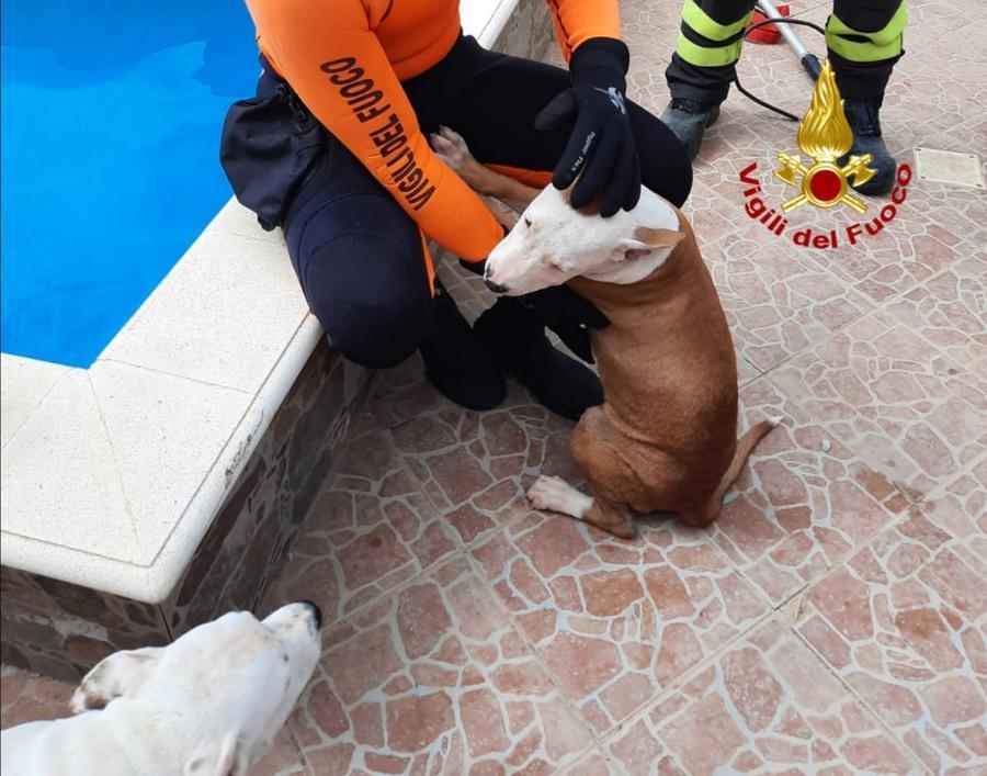 Il recupero dei cuccioli (foto Vigili del fuoco)