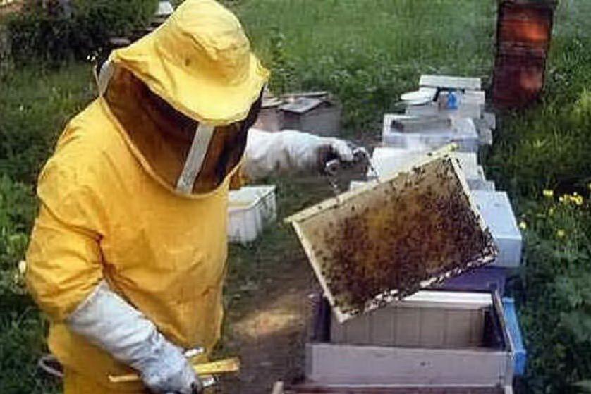 Regione Sardegna, gli aiuti per gli apicoltori