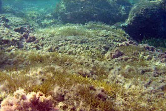 Oristano, il Centro marino internazionale seleziona un ricercatore in campo ecologico