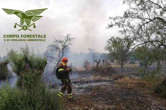 Incendi a Cuglieri e Bonorva, Corpo forestale in azione