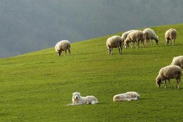 Precipita nel burrone mentre accudisce le pecore, muore pastore