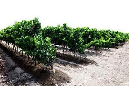 Il compost di Arborea in regalo ai Comuni dell'Oristanese