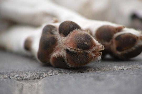 Travolge un cane e cade dalla moto: paura a Furtei