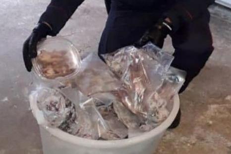 Maxi sequestro di ghiri congelati, il piatto preferito dai boss della 'ndrangheta