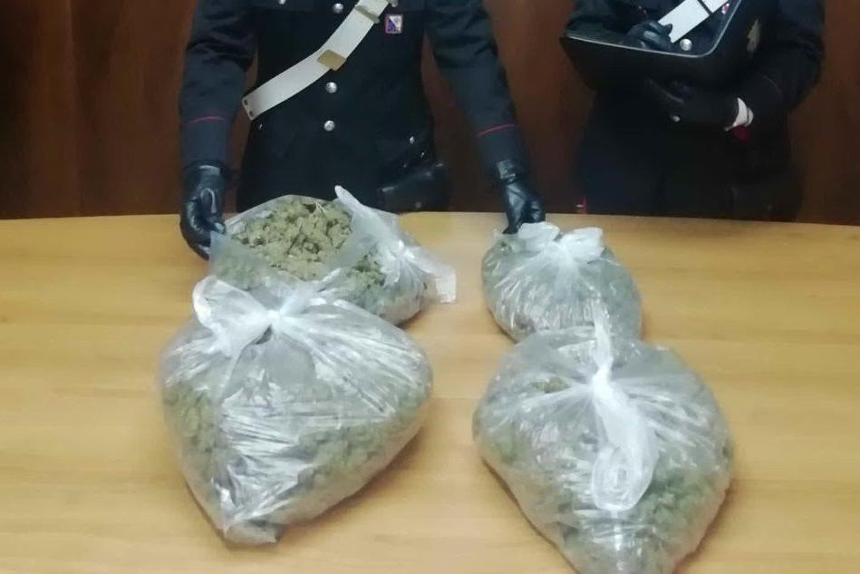 Tre chili di marijuana in casa, due fratelli in manette a Sassari