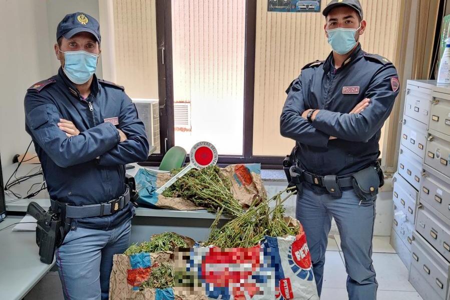 """""""Trasportiamo mangime"""", ma avevano oltre 20 chili di marijuana. Allevatori arrestati dalla Volante di Nuoro"""