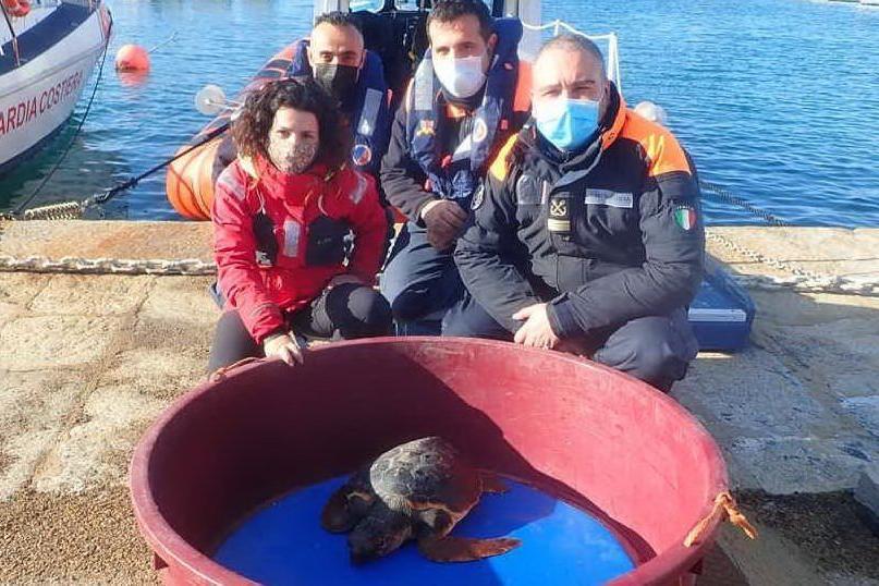 Tartaruga intrappolata nella rete: al Crama Asinara arriva Pollicina