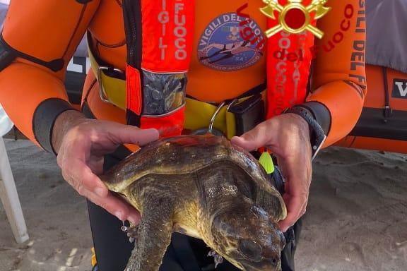 Poetto, avvistata una tartaruga ferita: salvata dopo l'allarme dei bagnanti