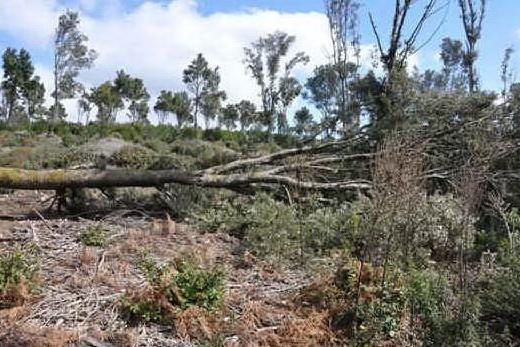 Taglio di legnatico nella foresta del Marganai