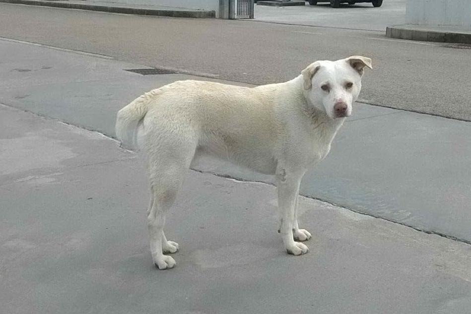 Il cane Fulmine (foto Busia)