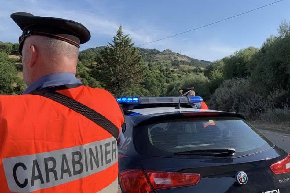 Bestiame in strada nel Nuorese: multati 18 allevatori