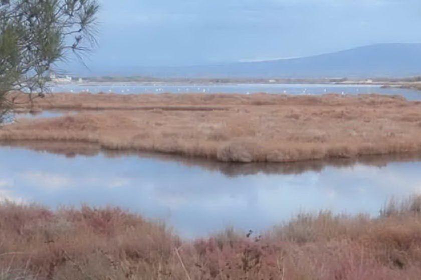Terre d'acqua, nell'Oristanese un progetto-pilota di tutela della biodiversità