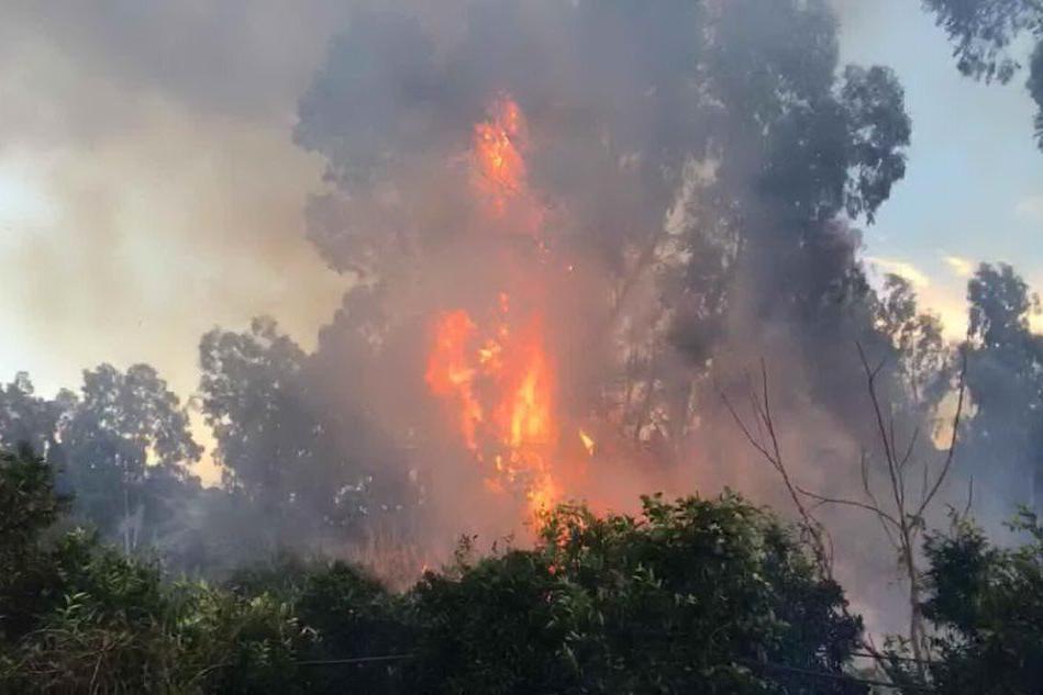 Incendio in un canneto a Villacidro, le immagini