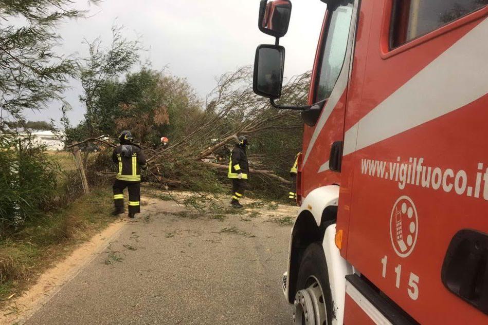 Lido di Orrì, albero crolla sulla strada
