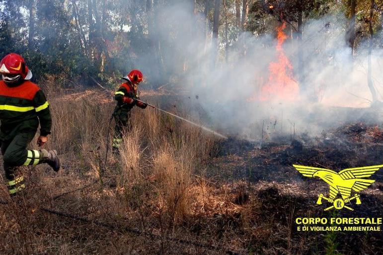 La Forestale in azione a Nuoro (Foto Corpo forestale)