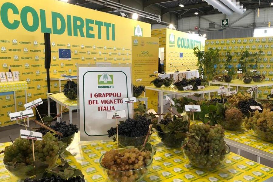 """A Verona torna il Vinitaly con un'edizione """"speciale"""" per l'export"""