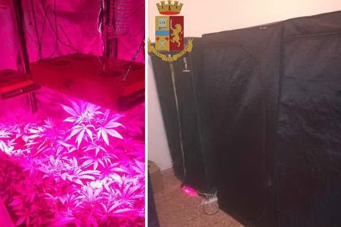 In casa la serra per la marijuanaIn manette un trentaduenne