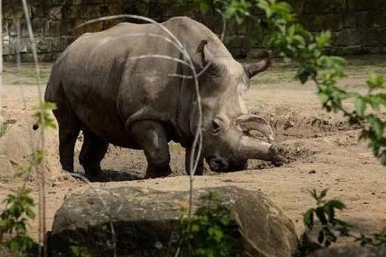 Ecco dove sparare ai bracconieri è legale: il parco nazionale difende gli animali