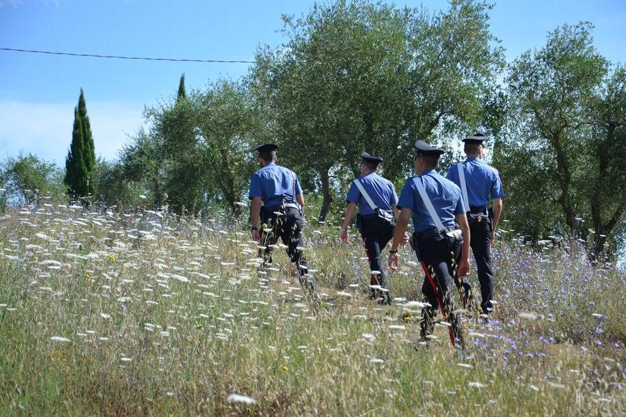 Quindici rotoballe rubate nascoste nel fienile: la scoperta dei carabinieri