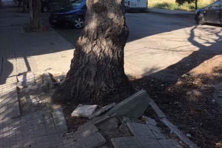 Alberi pericolosi, il comune di Sassari pronto agli abbattimenti