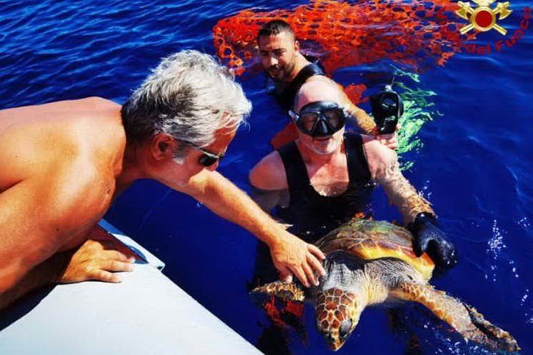 Asinara, tartaruga salvata dai sub dei vigili del fuoco