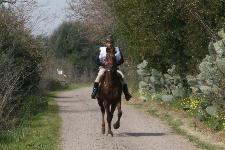 Endurance equestre, nel weekend la gara internazionale ad Abbasanta