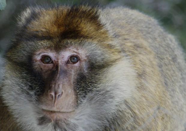 """Cina,morto il primo paziente affetto da """"vaiolo delle scimmie"""" - L'Unione Sarda.it"""