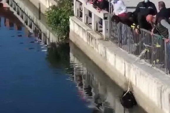 Milano invasa dai cinghiali: si scatena la caccia nel centro città