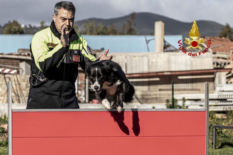 Ecco i cani che entrano in servizio in Sardegna per trovare i dispersi