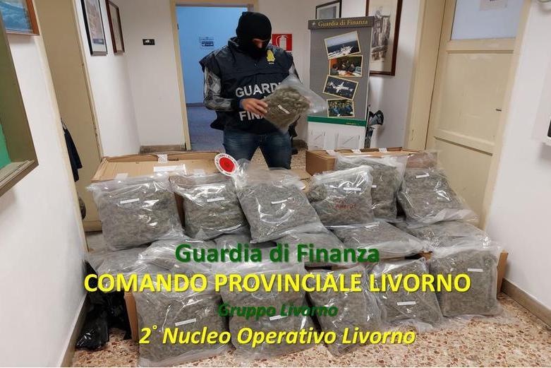 Operazione antidroga fra Toscana e Sardegna: maxi sequestro di marijuana