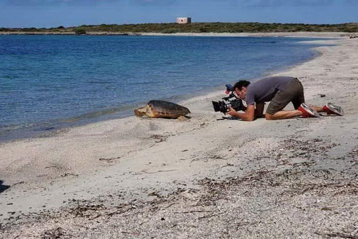 La tartaruga Malez riprende il largo sull'isola dell'Asinara