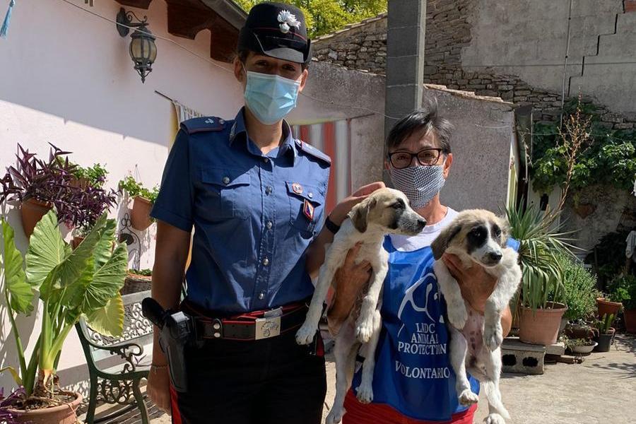 Mandas, cuccioli maltrattati dal padrone: presto potranno essere adottati