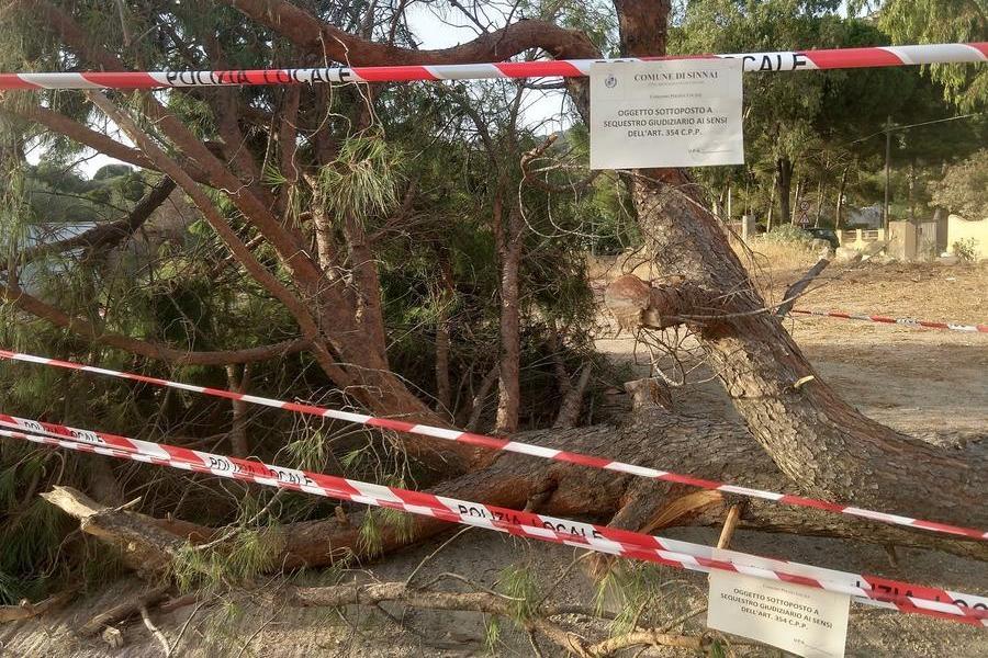 Dopo il pino reciso a Torre delle Stelle, danneggiato a Feraxi un ginepro secolare