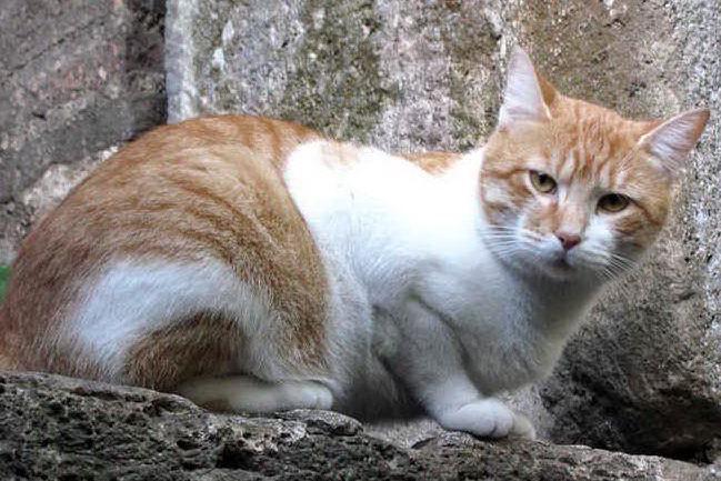Budoni, avvelenatore seriale di gatti a processo