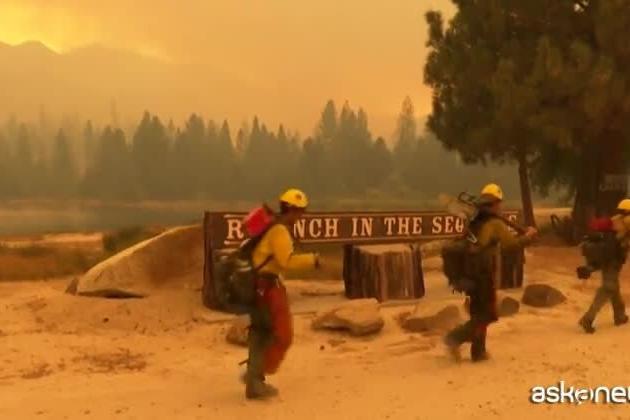 In California continua la lotta per salvare le sequoie giganti