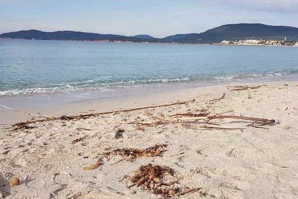 Alghero, Maria Pia come il Poetto: spiaggia invasa dalle canne