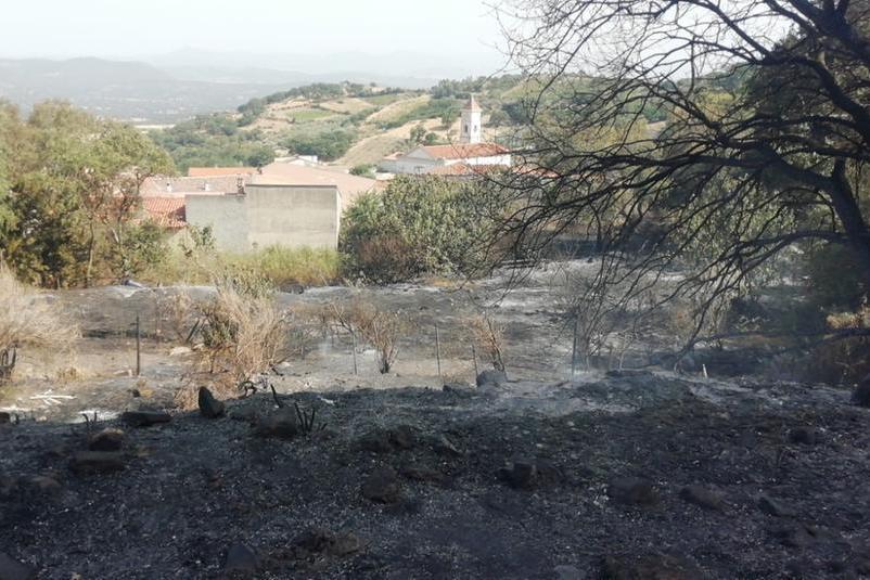 Un'immagine della collina bruciata (L'Unione Sarda - Tellini)
