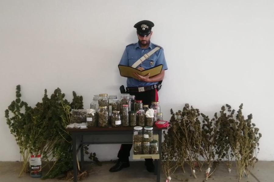 """""""C'è odore di marijuana in macchina"""": e a casa scoprono una piantagione"""