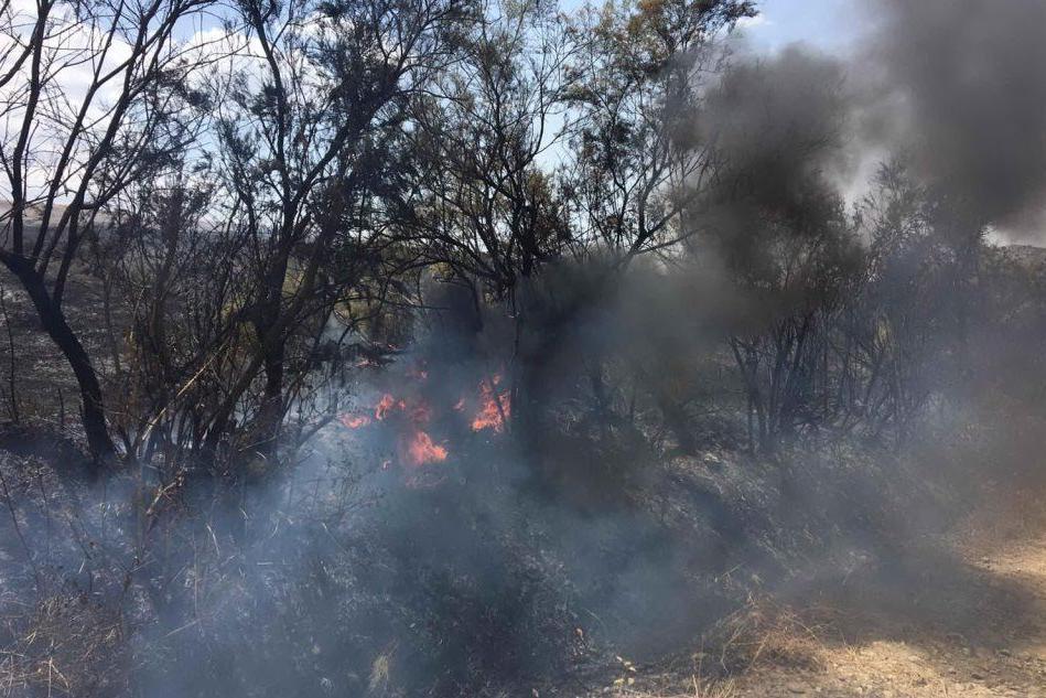 Nuraminis, il fuoco distrugge le coltivazioni: LE FOTO