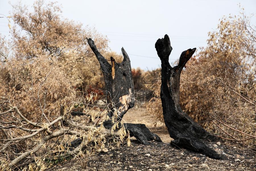 Uno dei tantissimi alberi divorati dalle fiamme (foto N. P.)