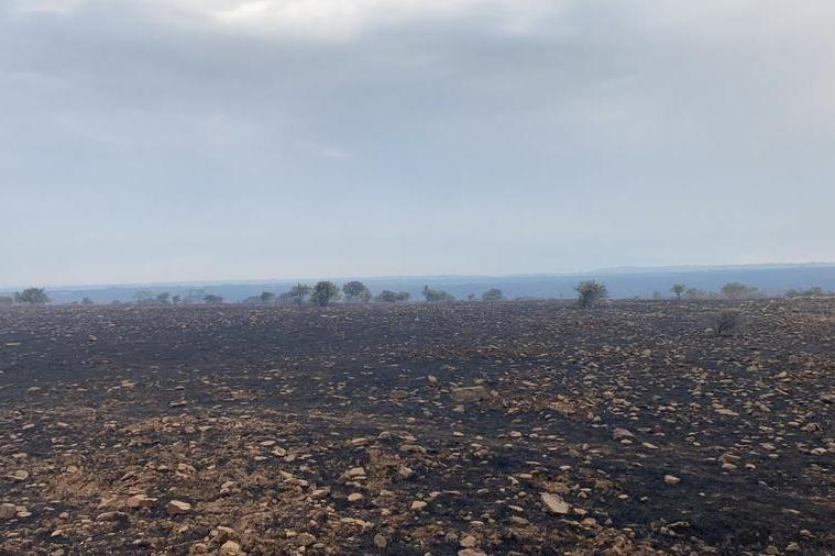 Pascoli bruciati (foto Coldiretti)