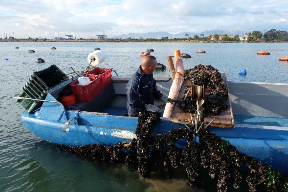 Colibatteri in laguna: Santa Gilla, bloccata la raccolta di cozze e vongole