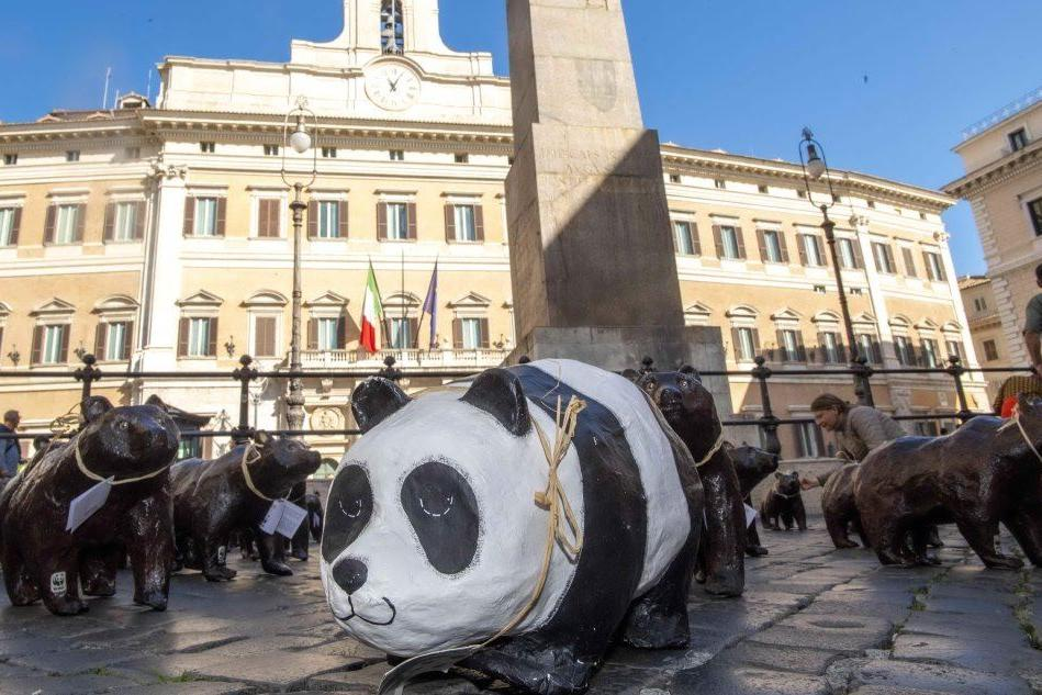Montecitorio, l'invasione dei cinquanta orsetti