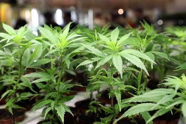 Lanusei, il mistero degli 11 sacchi di marijuana abbandonati in un torrente